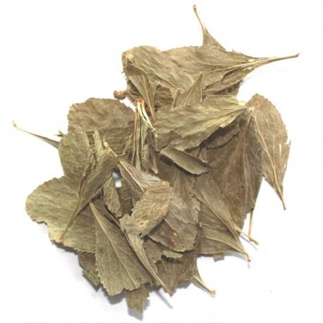 Барбарис лист