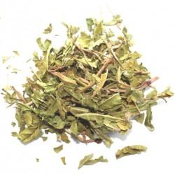 Водяной перец трава (Перец почучуйный)