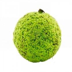 Маклюра плод (сезонный продукт)