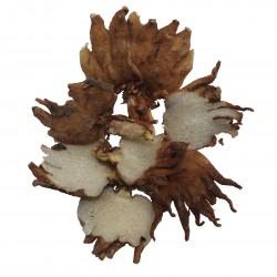 Ятрышник (салеп) корень 100 грамм