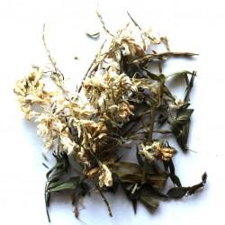 Галега (Козлятник) трава