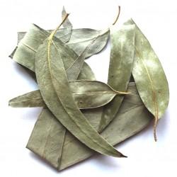 Эвкалипт лист