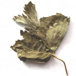 Земляника лист