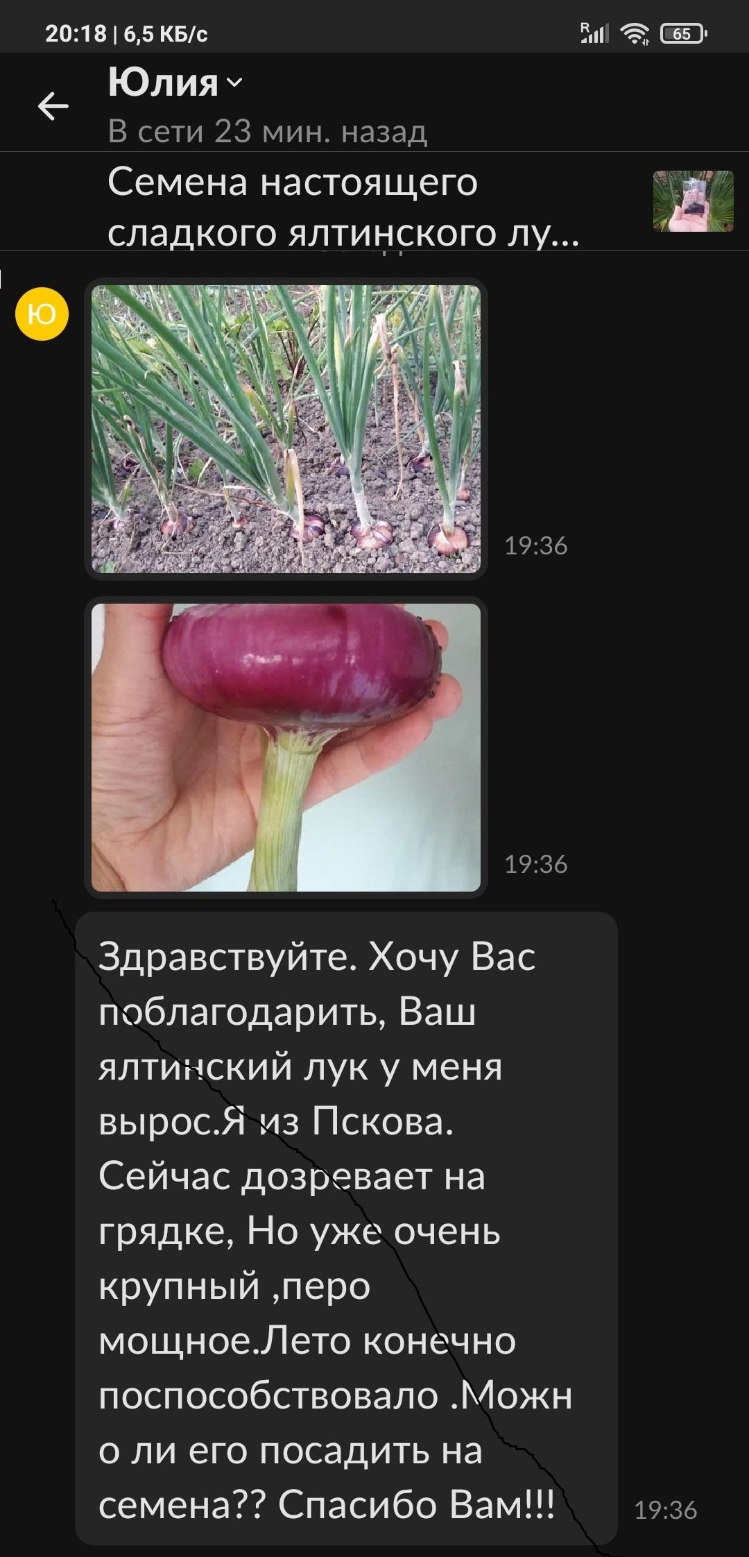 Семена ялтинского лука отзыв купить крым-трава ру