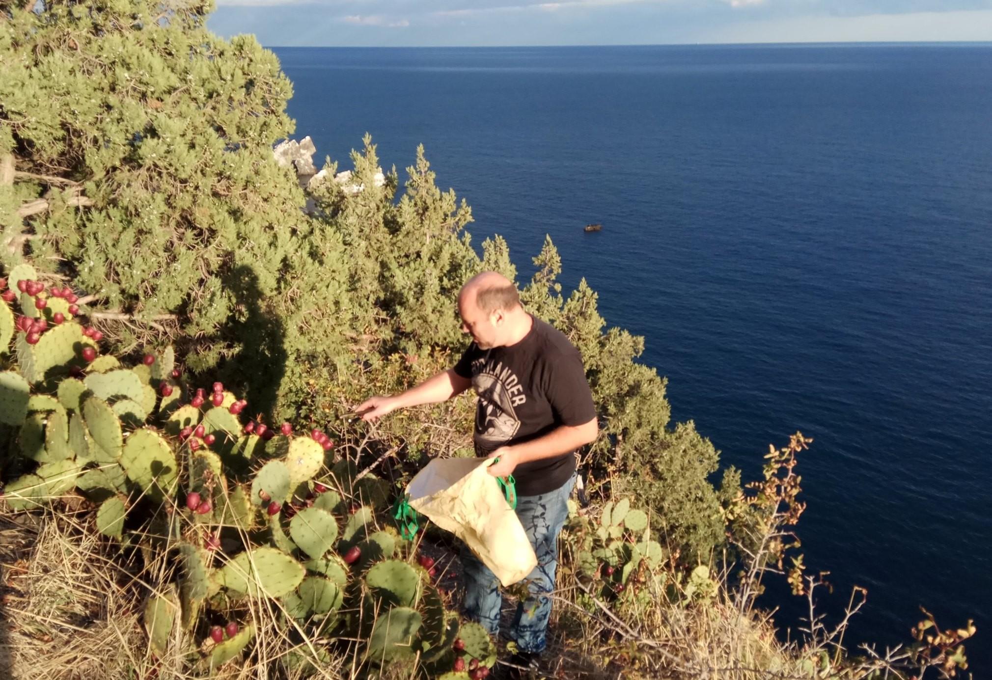 органический уксус из плодов опунции купить на Крым-трава